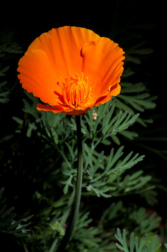DAY 82 - A Touch of Orange