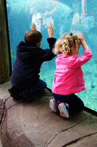 Kids-looking-at-hippos