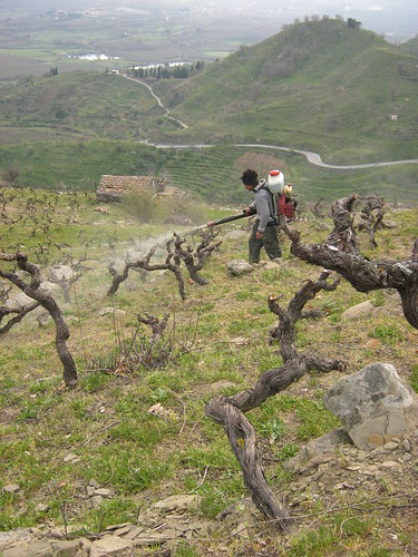 manual treatment of vines