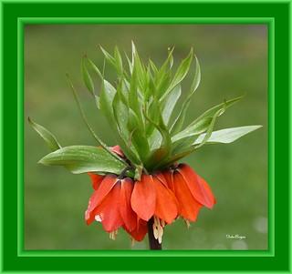 FLOWERS 08042012 044