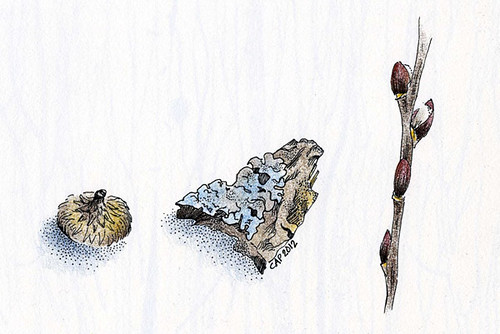 Small Nature Objects