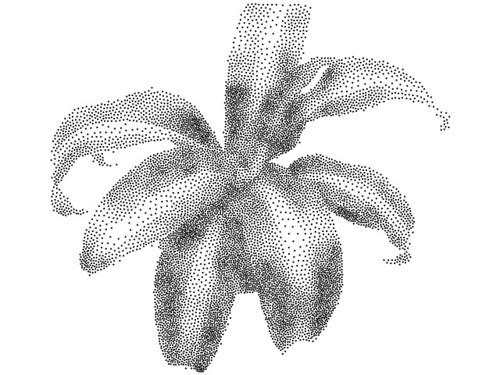 plant10k_fixedsize