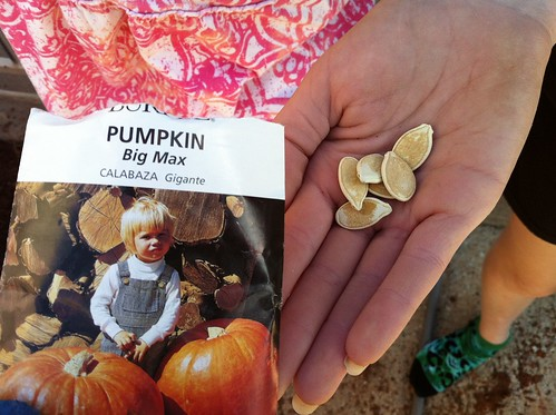 "These are seeds for ""Big Max"" Pumpkins"