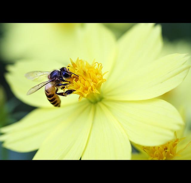 IMAGE: http://farm8.staticflickr.com/7238/7156879750_33fe1a8c0a_z.jpg