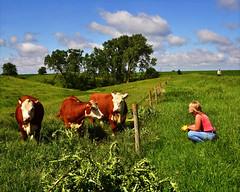 Tres vacas en el campo observadas por una mujer