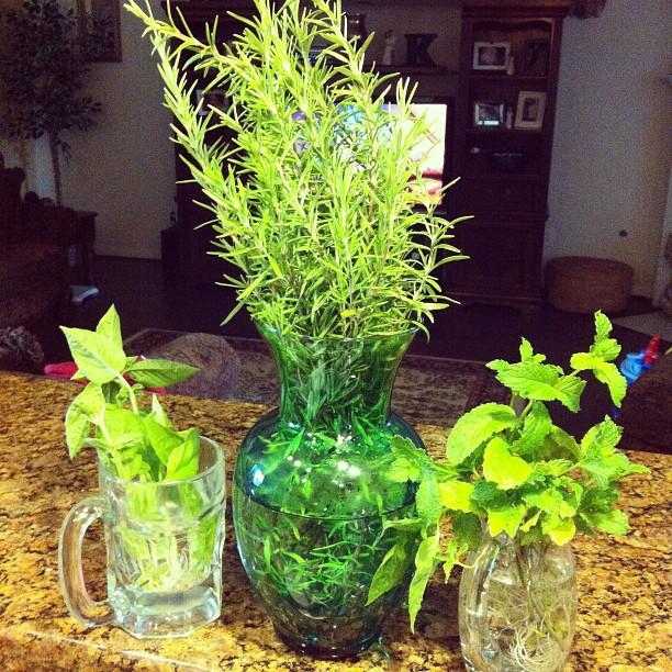 #Herbs