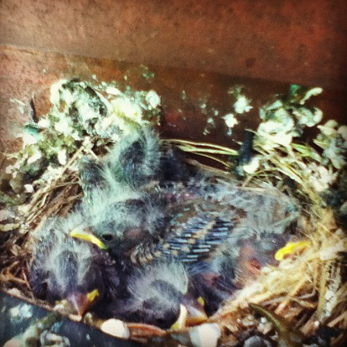 Baby birds! Good thing we plan on power washing the house soon (after the birds are gone obviously).
