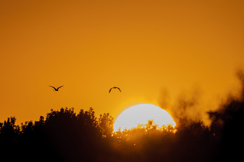 Egret Sunset_8271.jpg