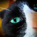 Cat Eye Fish Eye