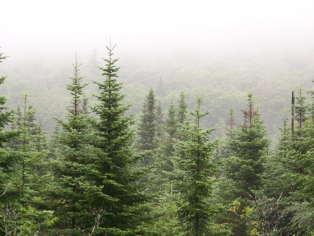 Alpine Trees Surrounded By Fog Reh037 Flickr