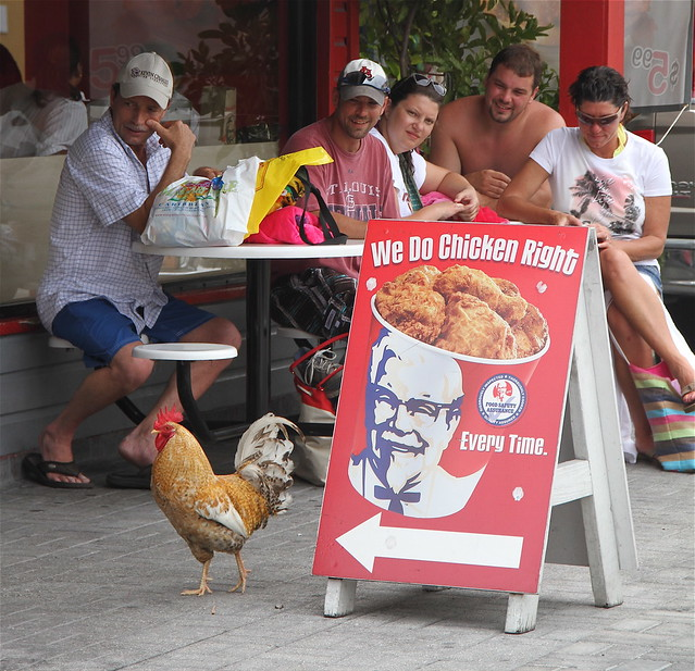 cayman islands george town kentucky fried chicken chicken walking by