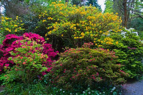 Clyne Gardens, Swansea, Wales