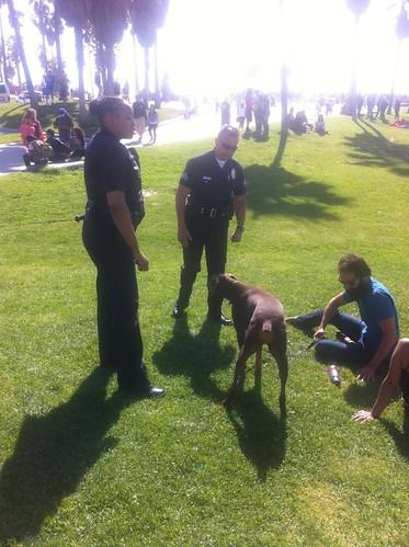 Dogs in Venice Beach