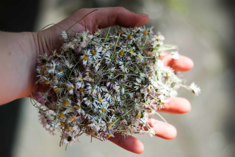 dryed flowers