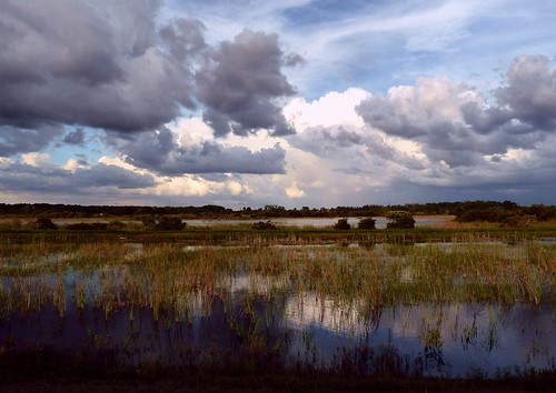 reflection rain clouds interesting unitedstates florida wildlife explore 101 national everglades fields cloudscape refuge southflorida sawgrass flooded loxahatchee lookingeast explored number101 raineyseason bestposition328~6312
