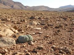 Paisaje con planta piedra