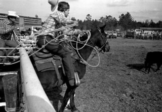 Gurney Geiger opening the gate for a calf roper at the Macclenny Rodeo: Macclenny, Florida