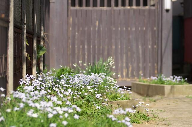 東京春景色 谷中・上野路地裏散歩 2014年4月12日