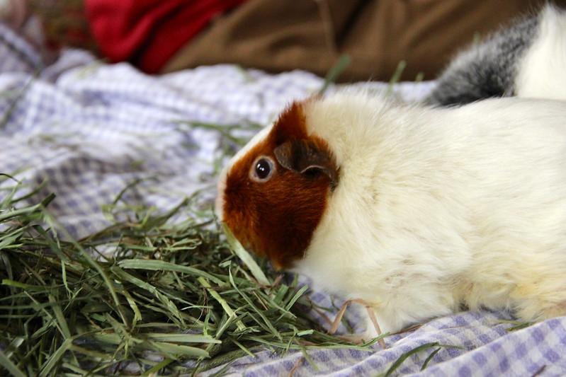 fluffed Annabelle