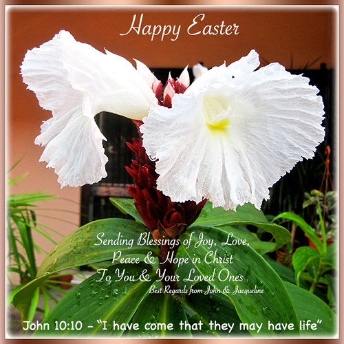 2014 Easter Greeting Card with flowers of Cheilocostus speciosus (Crepe Ginger)