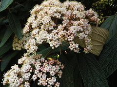 Tiniest flowers - Photo of Ménéac