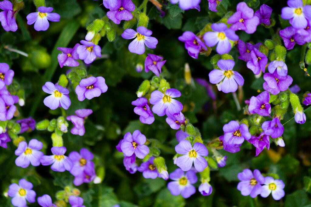 Purple Flowers Room Decorations