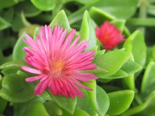 Pink Flowers and Green Vegetation