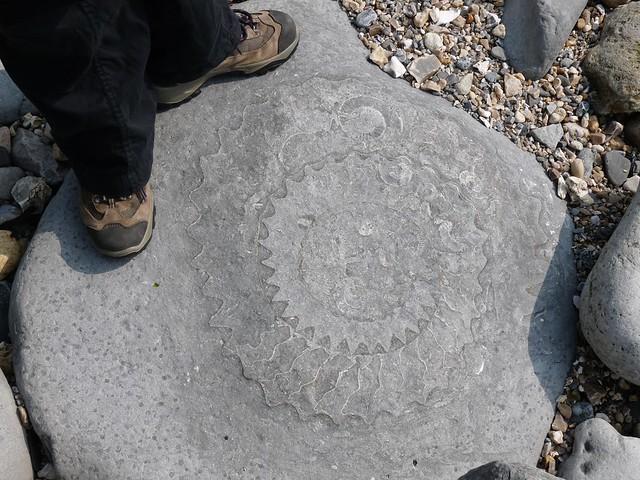 24271 - Fossil Ammonite, Lyme Regis