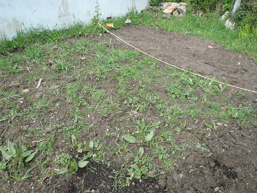 weedy veg patch