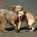 Synchronized Idiots #2 by Dogogle