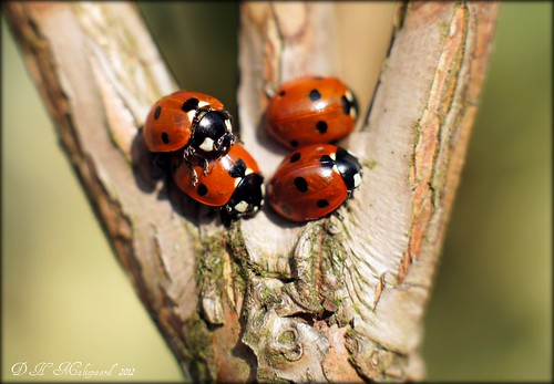Ladybirds.  Explore !
