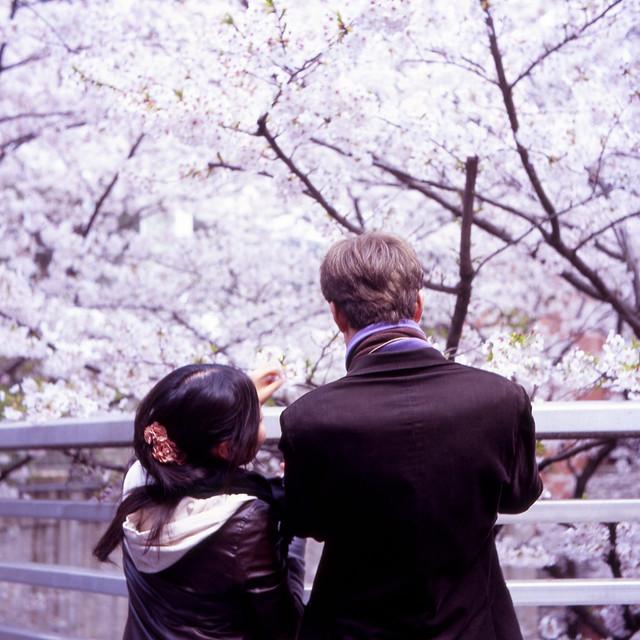 眼前の桜並木