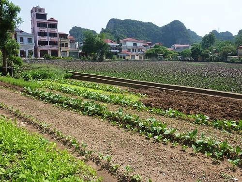 V-Lang Son-Lac Ho Phai Loan (4)