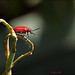 Small photo of Bugs Life