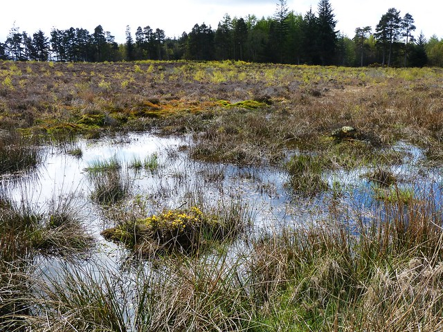 Boggy Moorland at Culloden Battlefield
