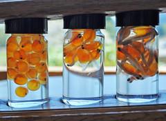 mason jar, glass, produce, fruit, canning,
