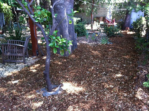 Mulch on the paths