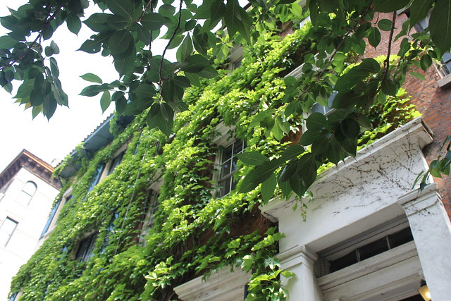 ivy-covered house, Bedford Street, West Village