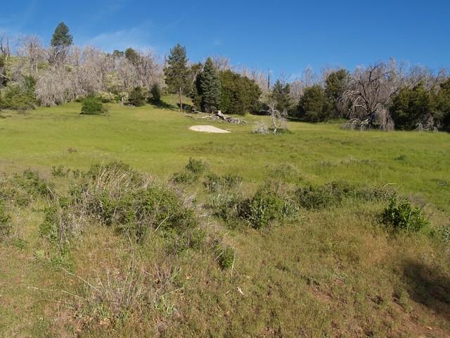 Azalea Glen Loop Trail Meadow