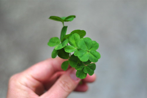 I have never found so many four-leaf-clovers