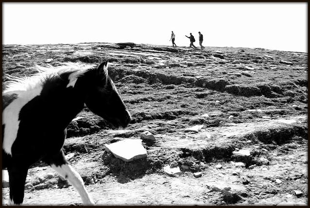 Man vs Horse