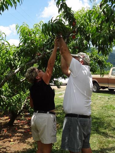 Peach Picking June 2012 (43)
