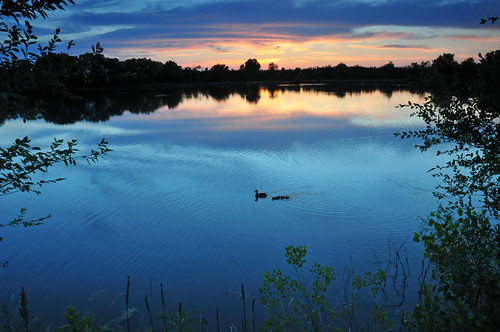 blue sunset duck twilight ducklings kansas mallard wichita chisholmcreekpark
