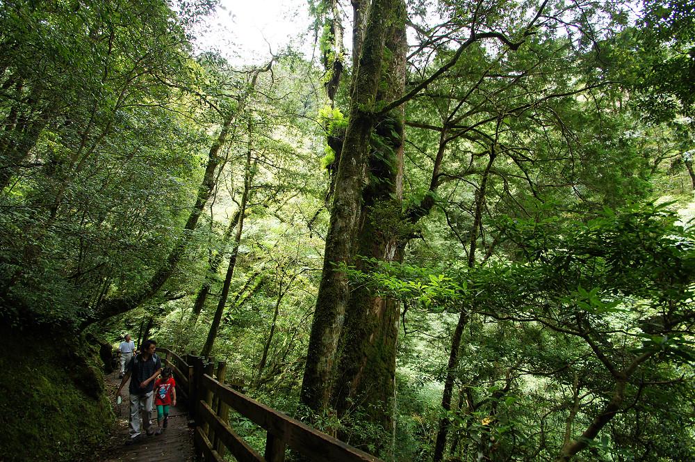 巨木群,與往拉拉山的路上-049