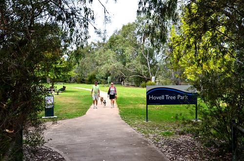 Hovell Tree Park  01