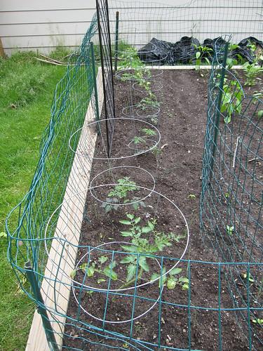 GardenWeek2 #9