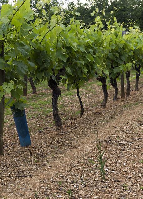 Dans les vignes et autres endroits inattendus 7389712444_12013b8f0b_z