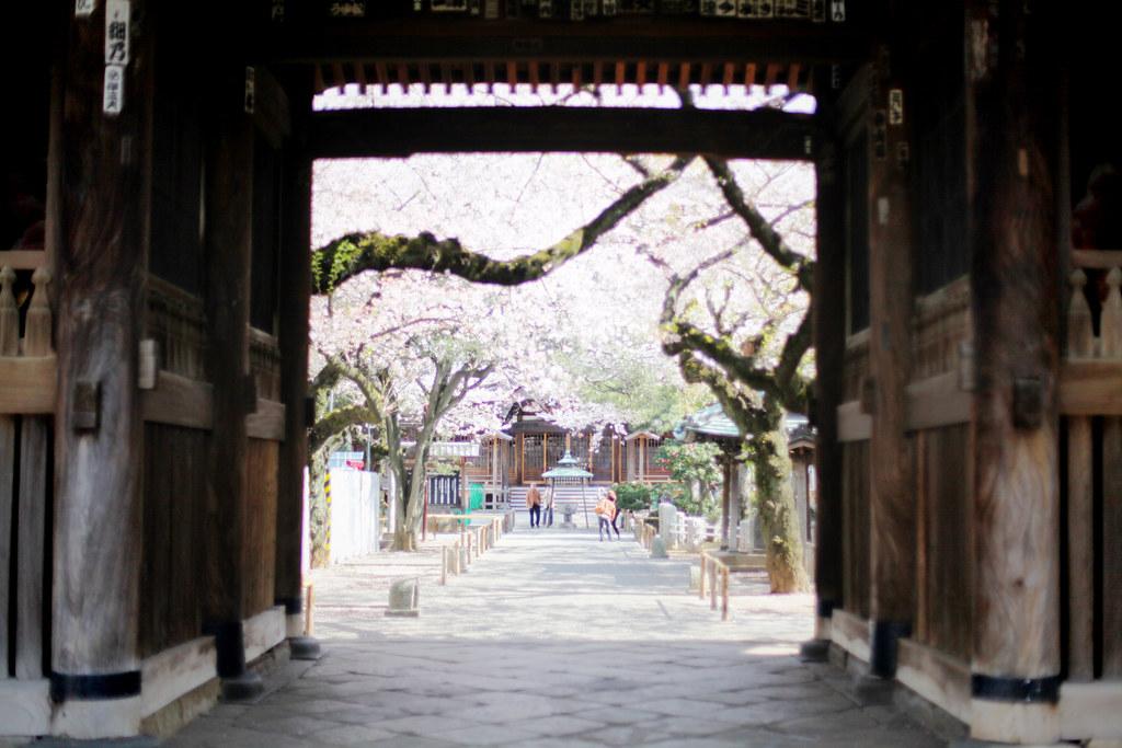 yutenji-18