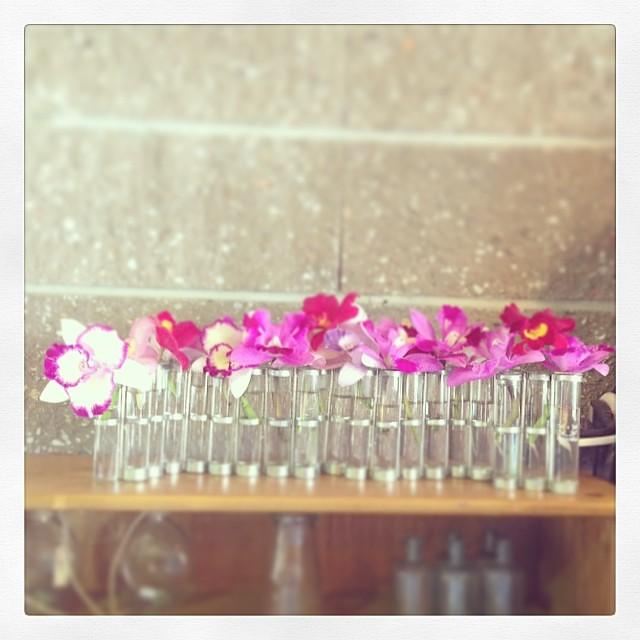 Photo:四月の花器にカトレア生けた。 By kanonn