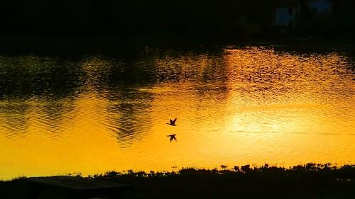 italy sunrise canon alba lombardia soe wow1 flickrestrellas laghidibrianza ringexcellence blinkagain dblringexcellence tplringexcellence flickrstruereflection1 flickrstruereflection2 sx40hs canonpowershotsx40hs